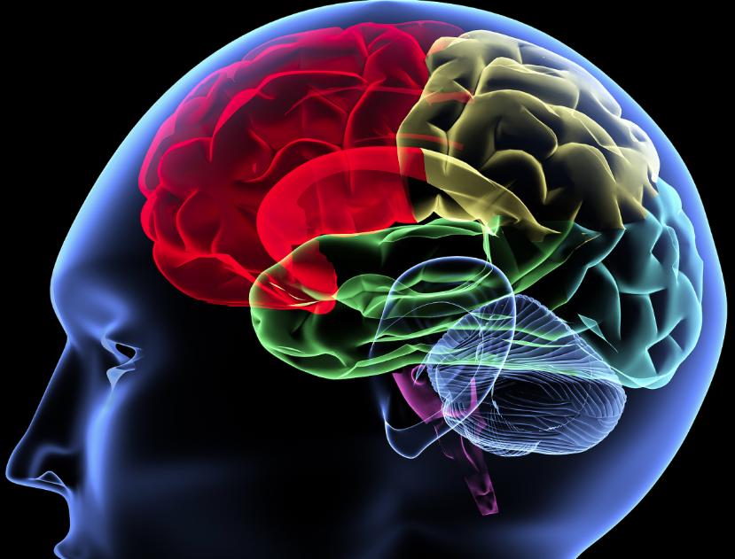 ПЭТ головного мозга с высокой детализацией